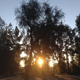 UCLA140.jpg