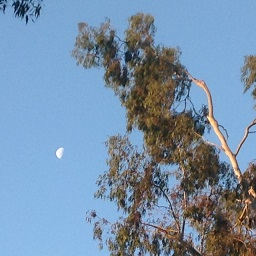 UCLA240.jpg