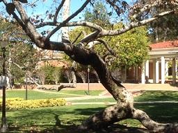 UCLA340.jpg